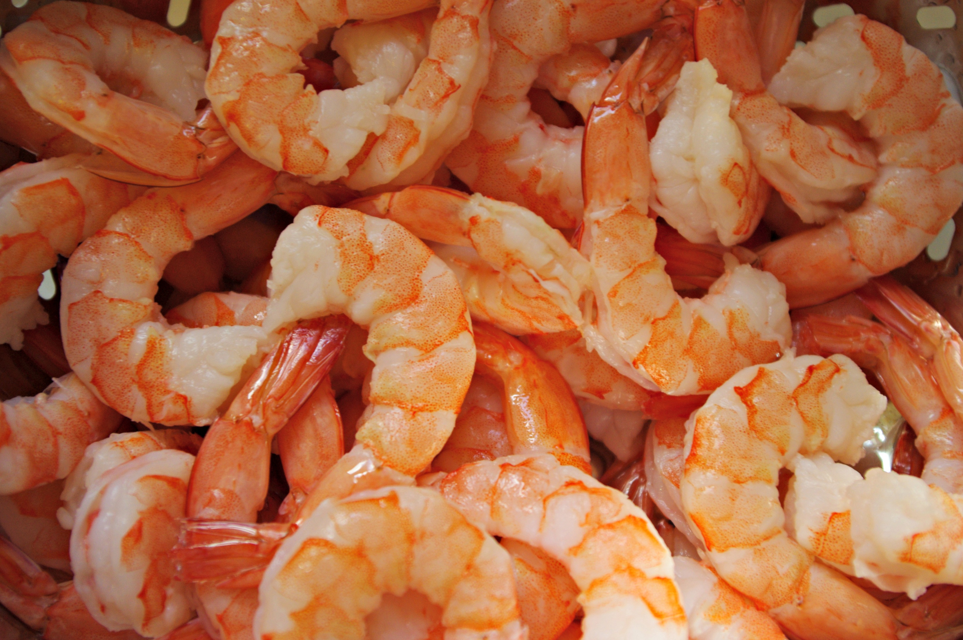 shrimp always takes the peel n eat shrimp lulu s perfect peel and eat ...