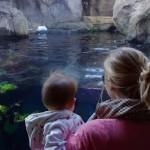 We Went to the Zoo, Zoo, Zoo