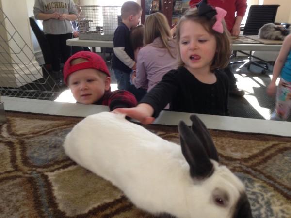bunny petting
